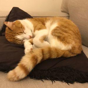 Cat Stevens Sleeping